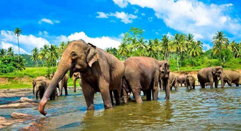 الاماكن السياحيه للاطفال في سريلانكا | دليلك لأجمل الرحلات بصحبة أطفالك