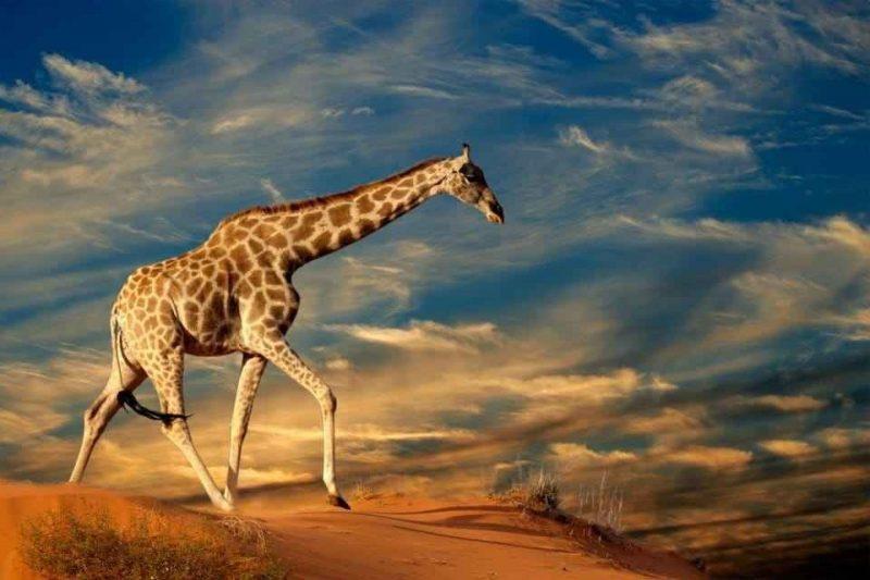 السياحة في بوتسوانا الدليل السياحى لبوتسوانا بلد الماس فى أفريقيا