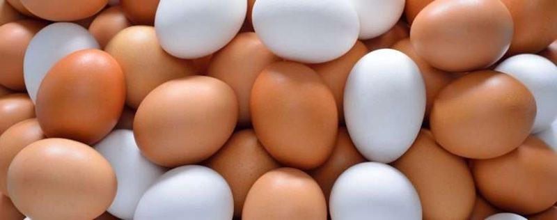 الفرق بين البيض الأبيض والبني