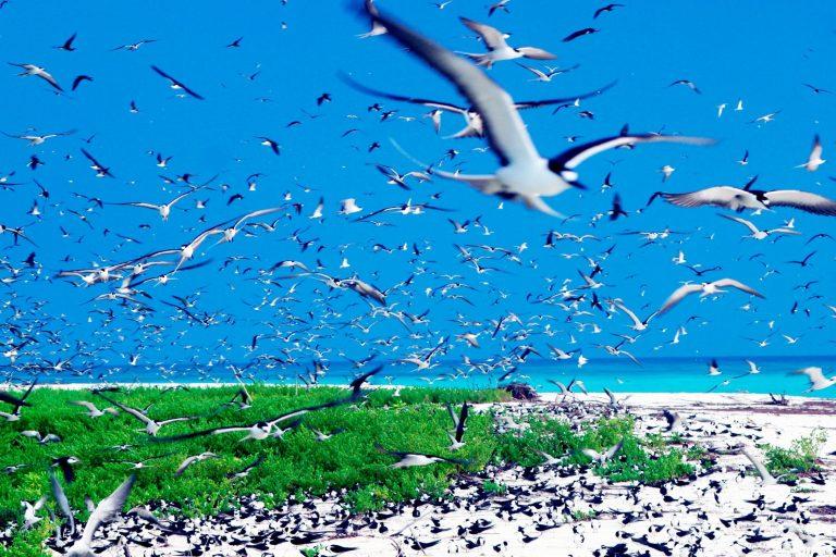 جزر سيشل ..جوهرة السياحة في إفريقيا وأجمل المحميات الطبيعية في العالم