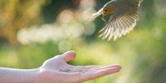 افضل انواع الطيور للتربية المنزلية أشهر 8 طيور للتربية في المنزل
