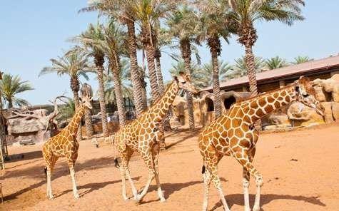 حديقة الإمارات للحيوانات في أبو ظبي … جولة داخل حديقة الحيوان بابوظبي
