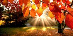 خواطر عن الخريف