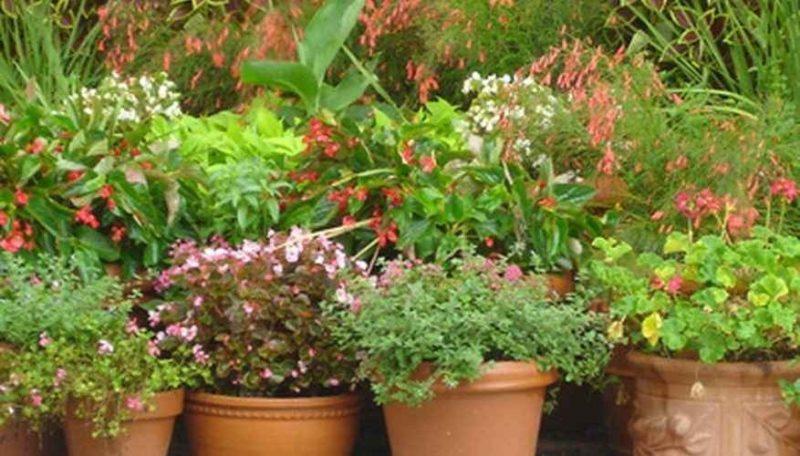 طريقة زراعة الاحواض .. تعلم زراعة احواض الازهار الرائعة لتزيين منزلك وشرفتك