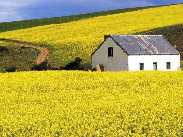 الحياة الريفية في جنوب افريقيا…وصف الريف الجنوب أفريقي ومظاهر العيش هناك