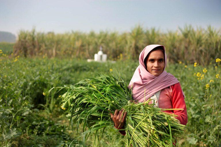 الحياة الريفية في تونس…أهم مظاهر الحياة داخل الريف التونسي –