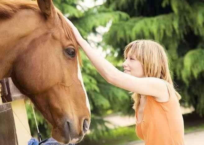 حقائق عن الخيول __ حقائق قد يهمك معرفتها عن الخيول وتربيتها