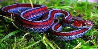 معلومات للاطفال عن الثعبان … تعليم الأطفال انواع الثعابين المختلفة