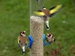 افكار لاطعام الطيور ….اليك أكثر من فكرة يمكنك تنفيذها لاطعام الطيور. بحر المعرفة