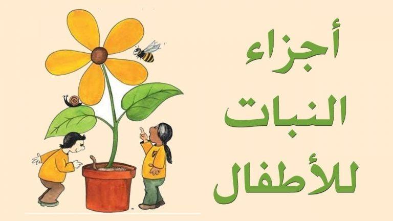 قصص عن أجزاء النبات للأطفال