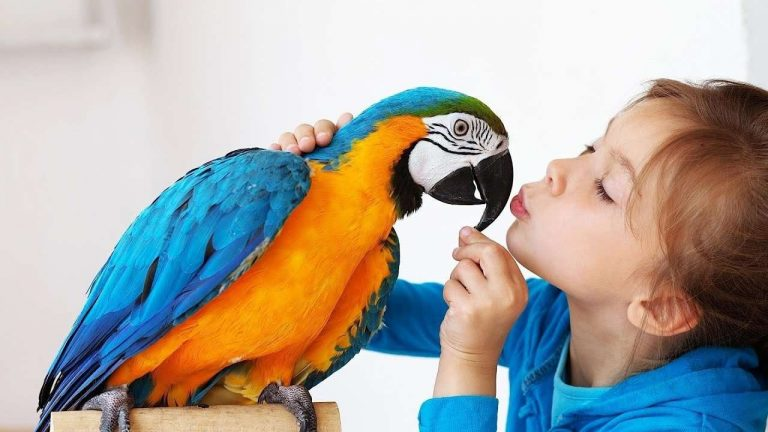 طرق تربية العصافير في المنزل
