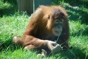 معلومات للاطفال عن القرد…… تعرف على أهم المعلومات والحقائق عن القرود l  بحر المعرفة