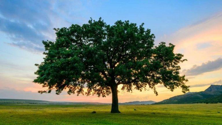 هل تعلم عن الشجرة ؟ مالا تعرفه عن الأشجار وفوائدها للطبيعة والمجتمع   بحر المعرفة