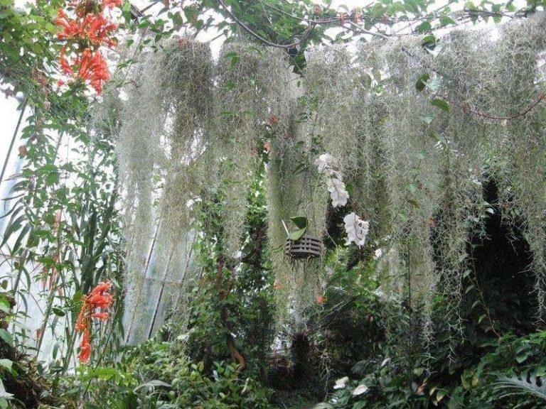 معلومات عن نبات الحزازيات  –