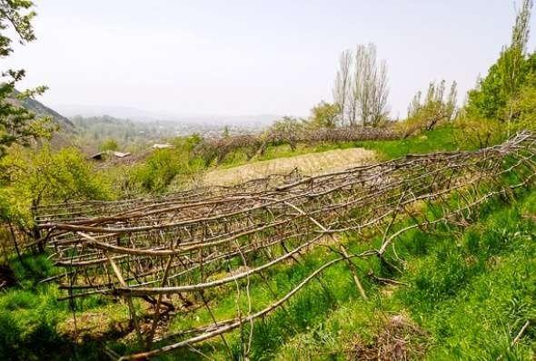 الحياة الريفية في أوزبكستان…. تعرف على حياه الريف فى أوزبكستان l  بحر المعرفة